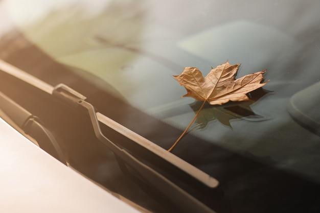 Hoja de otoño en el parabrisas de un automóvil. hoja de arce amarilla sobre vidrio
