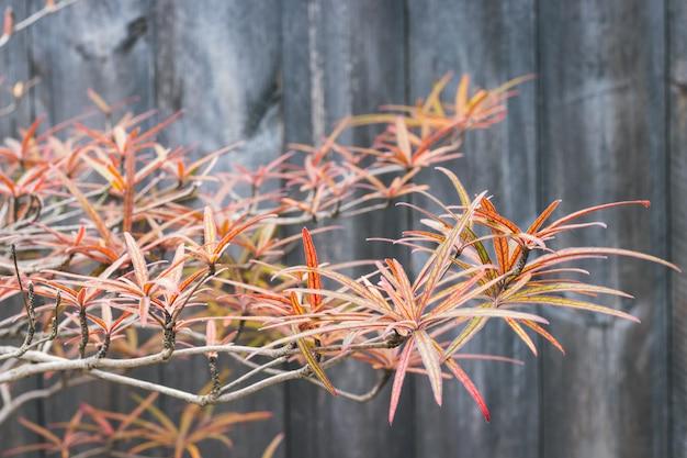Hoja de otoño y planta en madera de granero oscuro