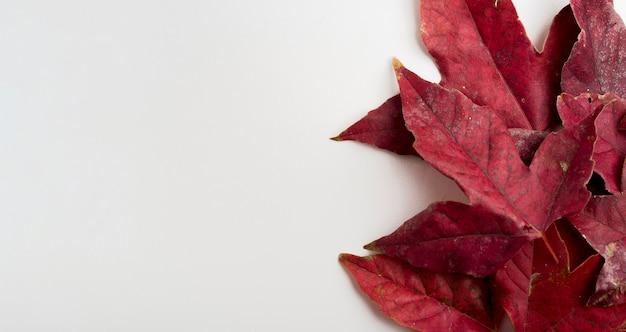 Hoja de otoño de primer plano con espacio de copia