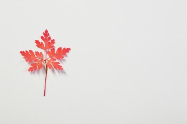 Hoja de otoño rosa sobre fondo blanco.