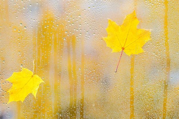 Hoja de otoño sobre vidrio con gotas de agua