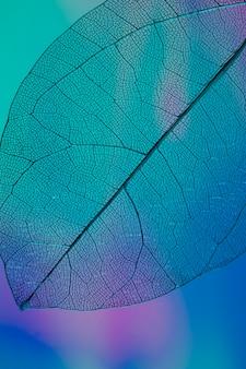 Hoja de otoño transparente color vibrante