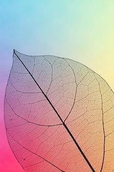 Hoja de otoño transparente de colores vibrantes
