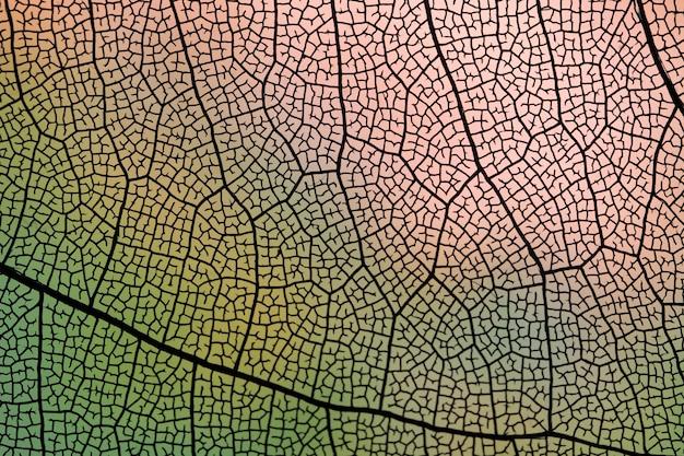 Hoja de otoño transparente con venas oscuras.