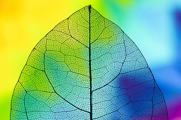 Hoja de otoño vívida transparente abstracta