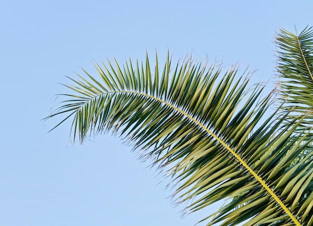 Hoja de palma contra el cielo azul con espacio de copia