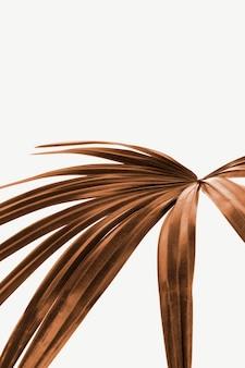 Hoja de palma teñida de cobre aislada sobre fondo