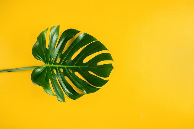 Hoja de palma tropical natural sobre fondo mínimo amarillo vibrante con espacio vacío