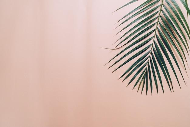 Hoja de palma tropical sobre fondo de color con copyspace