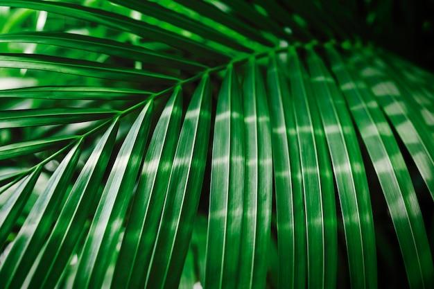Hoja de palma tropical verde con fondo de la luz del sol