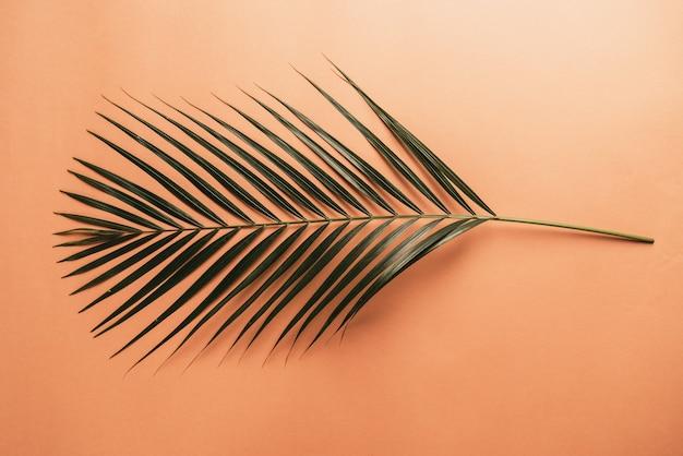 Hoja de palma tropical