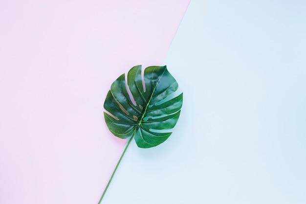 Hoja de palma verde grande en la mesa