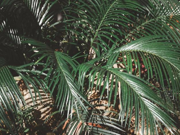Hoja de palma verde natural a rayas con textura, para uso de texto o fondo