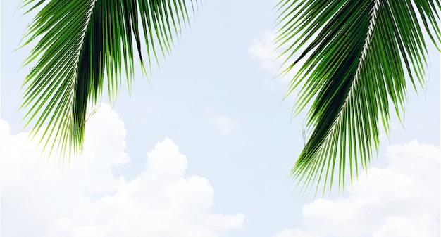 Hoja de palmas en el cielo azul con nubes en verano - fondo