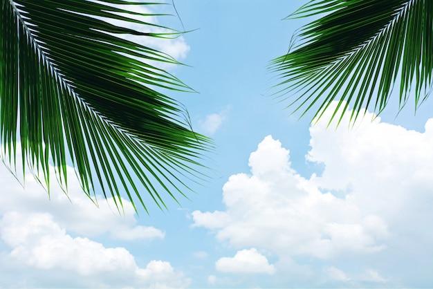Hoja de palmas en el cielo azul con nubes en verano