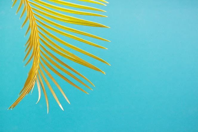 Hoja de palmera sobre fondo azul