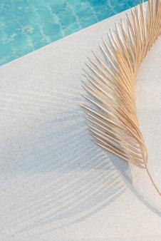 Hoja de palmera con sombra en la luz del sol junto a una piscina