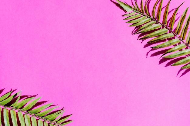 Hoja de palmera en superficie colorida