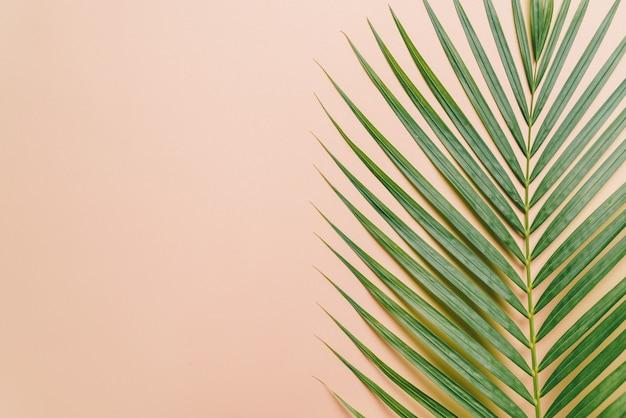 Hoja de palmera tropical