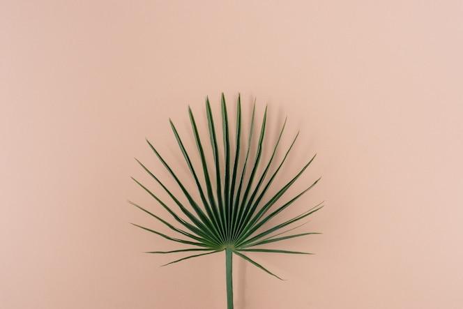 Hoja de palmera verde sobre fondo de color rosa