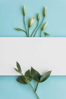 Hoja de papel cerca de hojas y capullos.