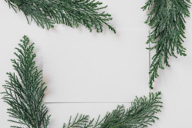 Hoja de papel con ramas de ciprés sobre mesa