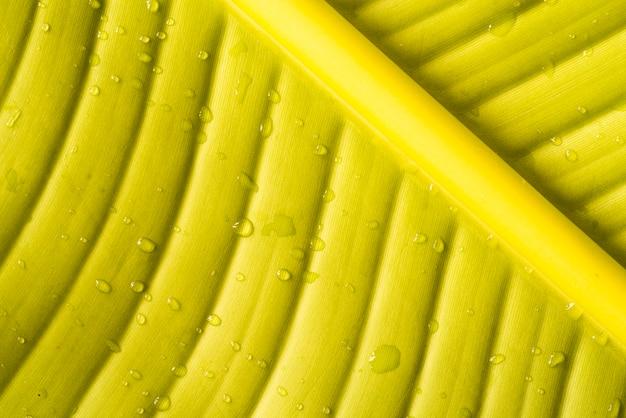 Hoja de plátano de primer plano con gotas de agua