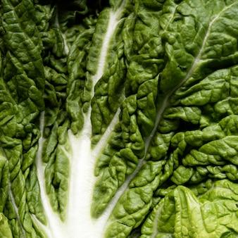 Hoja de primer plano extrema de ensalada fresca