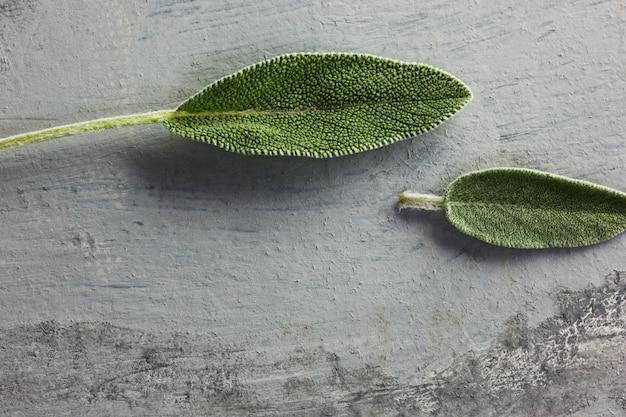Hoja de salvia fresca y orgánica sobre mesa gris