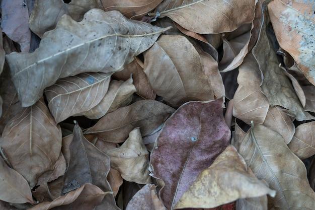 Hoja seca marrón