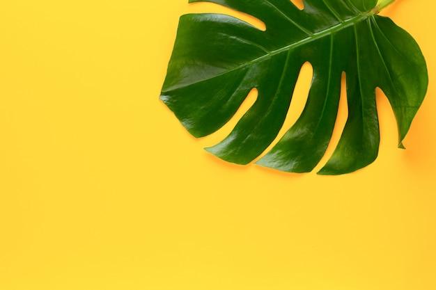 Hoja de selva tropical en mesa amarilla.