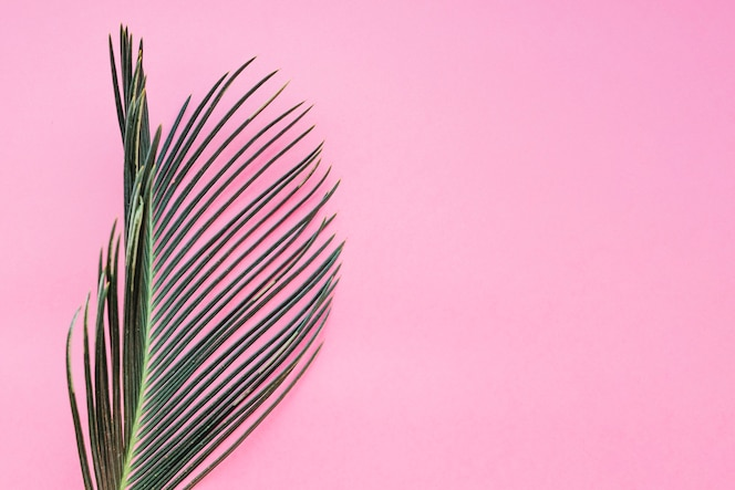 Hoja texturizada en rosa