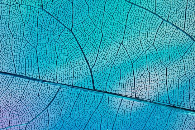 Hoja transparente con luz de fondo azul