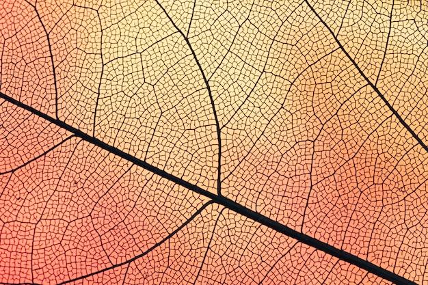 Hoja transparente con luz de fondo naranja