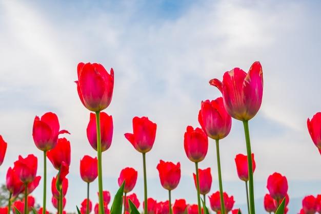 Hoja tulipán fondo naturaleza amarillo