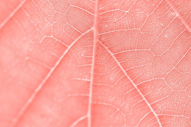 Hoja de uva, coral vivo tonificado, macro. de cerca la textura con espacio de copia para el diseño.