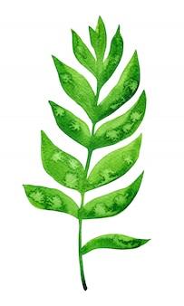 Hoja verde acuarela aislada en blanco