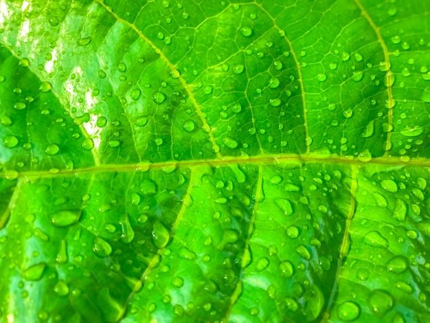 Hoja verde con agua cae fondo de naturaleza