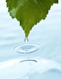 Hoja verde con agua