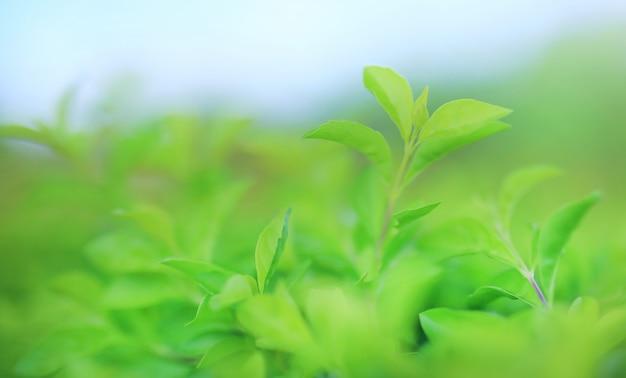Hoja verde del árbol en fondo borroso en el parque con el modelo limpio.
