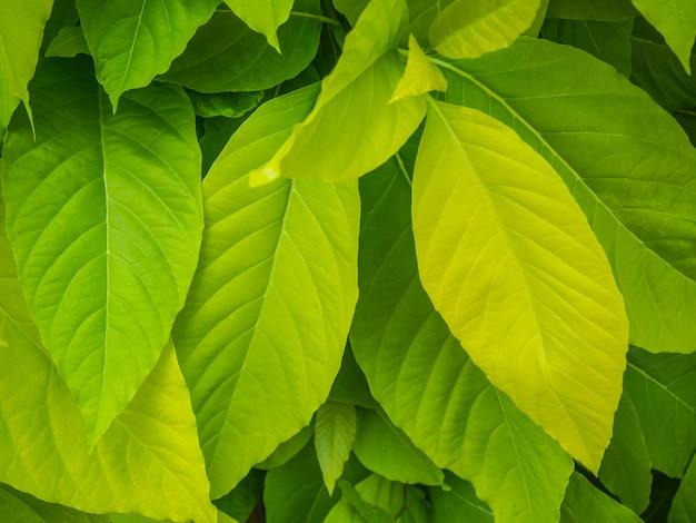 Hoja verde en el árbol para el fondo