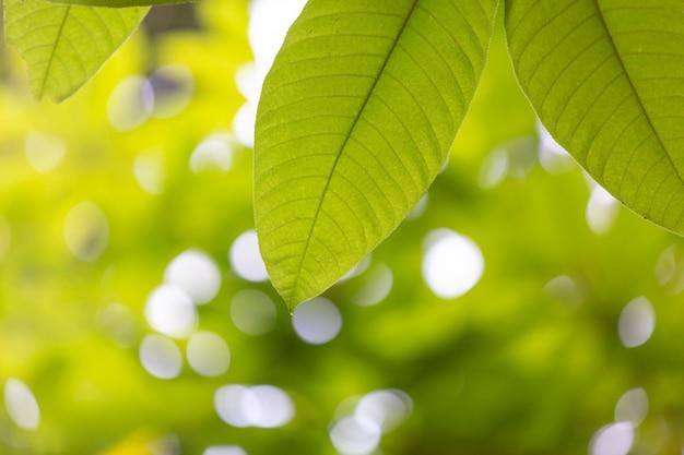 Hoja verde en el bosque.