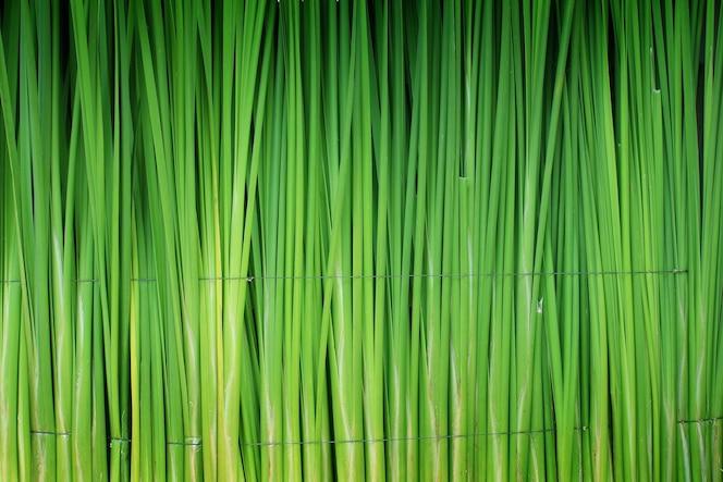 Hoja verde de papiro resumen de antecedentes