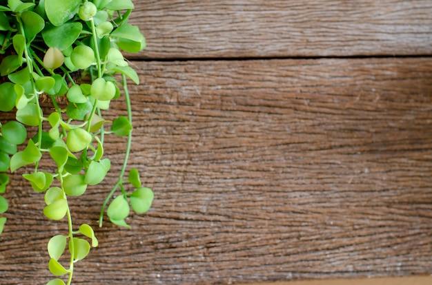 Hoja verde en el fondo de madera vieja.