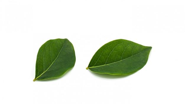 Hoja verde de la grosella espinosa de la estrella aislada en el fondo blanco