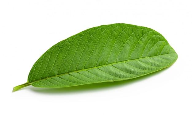 Hoja verde de la guayaba aislada sobre el fondo blanco.
