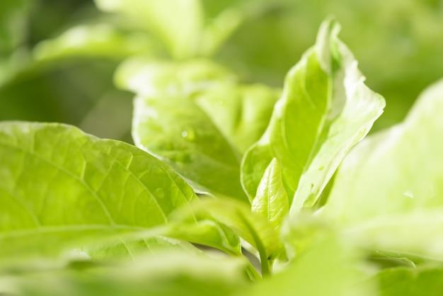 Hoja verde hermosa en fondo ligero de la mañana
