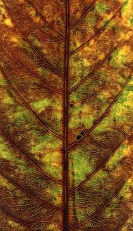 Hoja verde y marrón