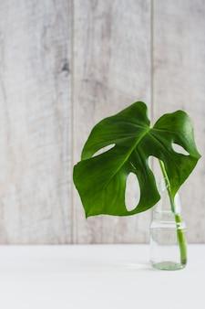 Hoja verde de monstera en un jarrón de vidrio sobre una mesa blanca con fondo de madera