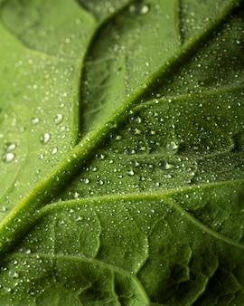 Hoja verde de primer plano con gotas de agua